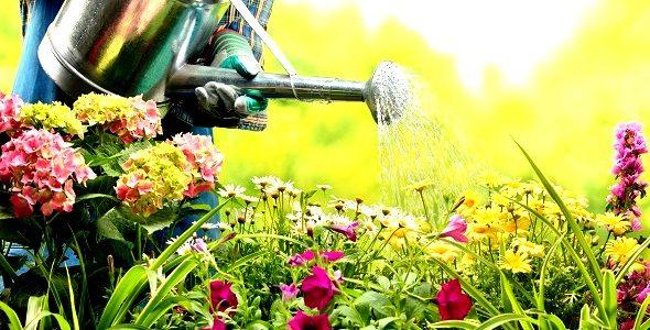 Hammocks & Garden